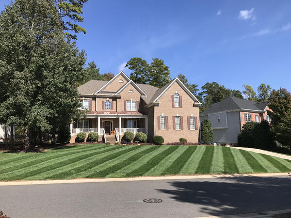 Beautiful front Elite Tall Fescue lawn