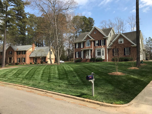 Beautiful angle view of a front lawn with Elite Tall Fescue sod