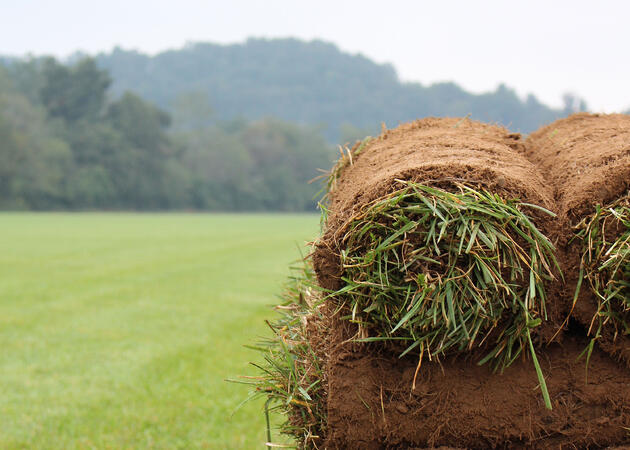 Close up of Elite Tall Fescue sod rolls