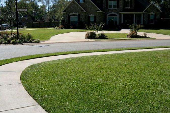 A more horizontal shot of TifBlair grass beside a sidewalk