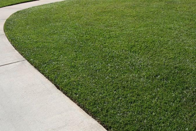 TifBlair grass beside a sidewalk