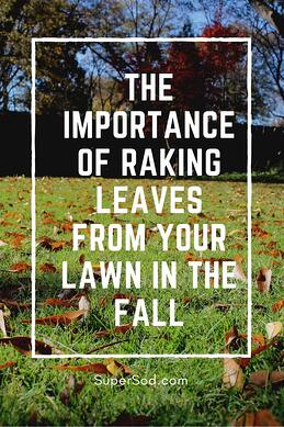 The importance of raking leaves for lawn health