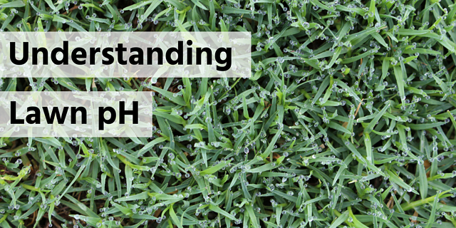Understanding Lawn pH - featured image