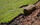 Up Your Curb Appeal in 2 Weeks: Laying your own sod - featured image