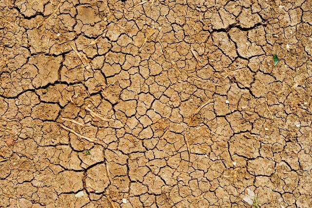 Surviving Drought - featured image