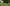 TifBlair Centipede Lawn Maintenance - featured image