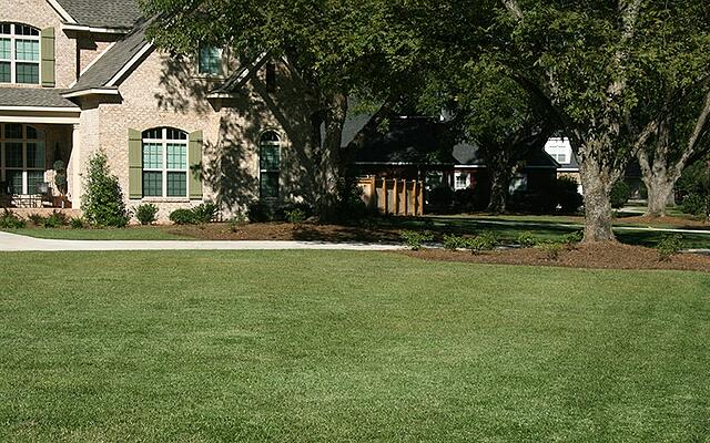 TIFBLAIR™ CENTIPEDE LAWN MAINTENANCE - featured image
