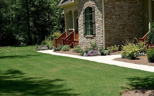 TIFWAY BERMUDA LAWN MAINTENANCE - featured image