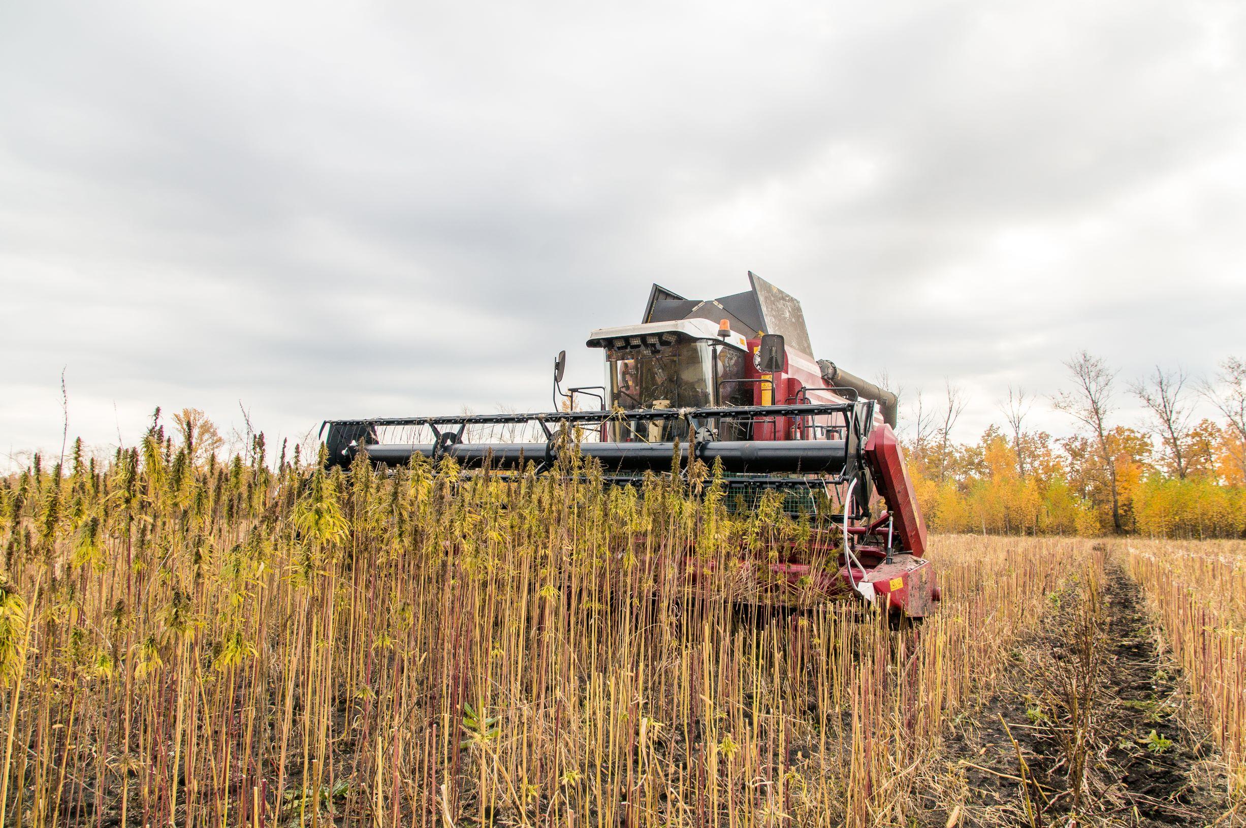 Occupational hazard farming CBD