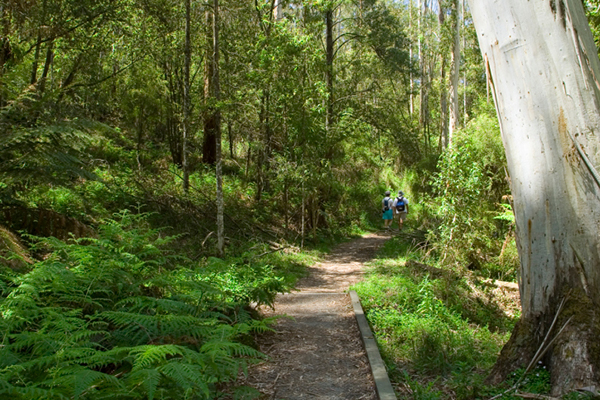 Melbourne-The-Dandenongs-Fine-Travel-Holiday