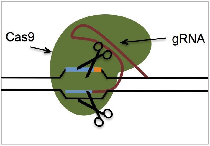 molecular biology lab report