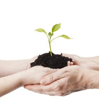 hands-plant.jpg