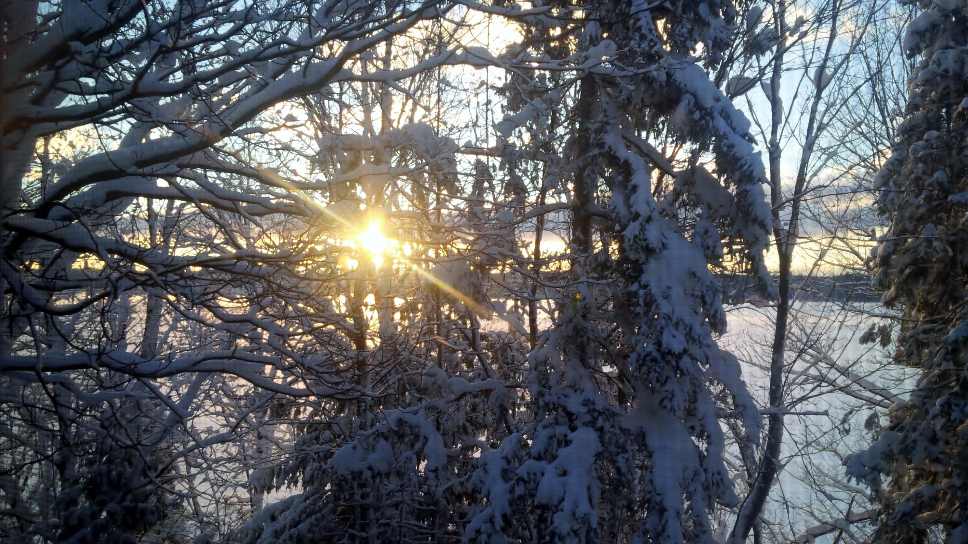 Filler_Sun_Through_Snowy_Trees.jpg