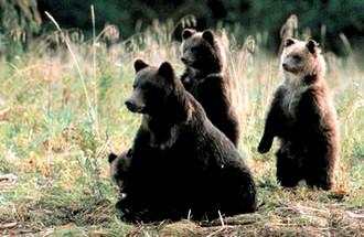 Great_Bear.jpg