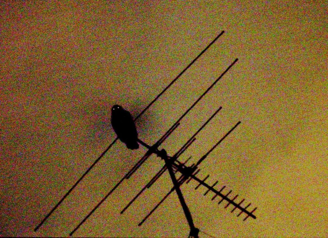 owl on antenna