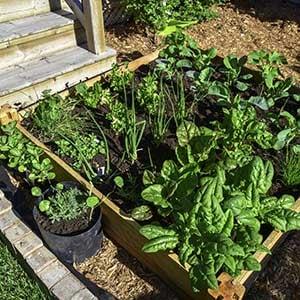 Home garden composting tips