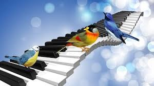 Bird Songs Why Birds Sing in Nature
