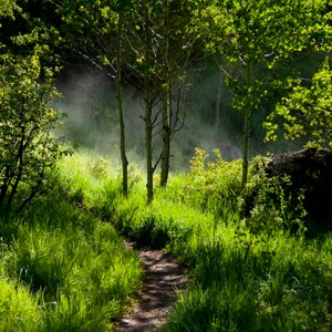 Booth-Falls.Walkin-the-Woods_WEB-300x300