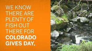 Colorado Gives Day Eagle County