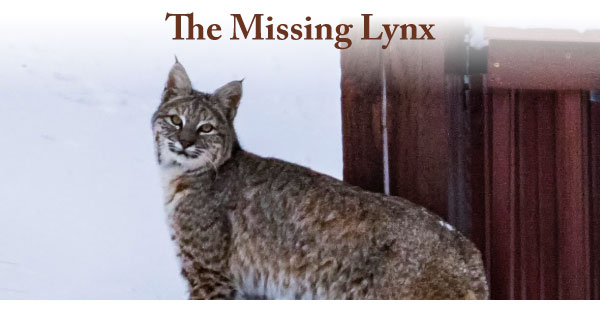 Curious-Nature-Missing-Lynx