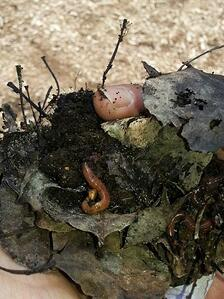 Frequently Asked Worm Composting Questions