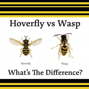 Animal Mimicry Hoverfly vs Wasp