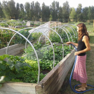 The Science Behind Backyard Gardening