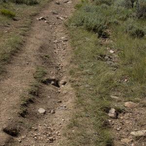TrailDamage_2-300x300