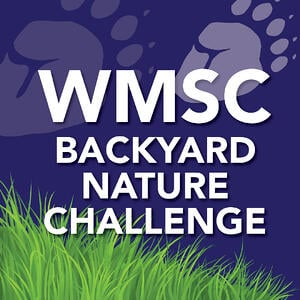 Backyard nature challenges for kids in quarantine