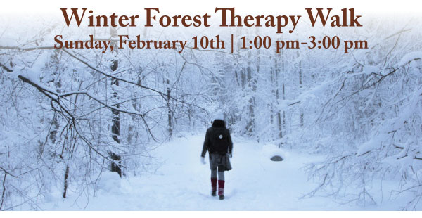 Winter-Forest-therapy-walk
