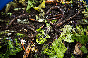 best-worm-composter-vermicomposting-colorado