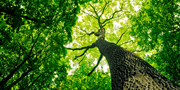 the next steps for Dramatic Growth in the Tree Care Industry