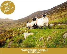 Wandering Aengus Tour.jpg