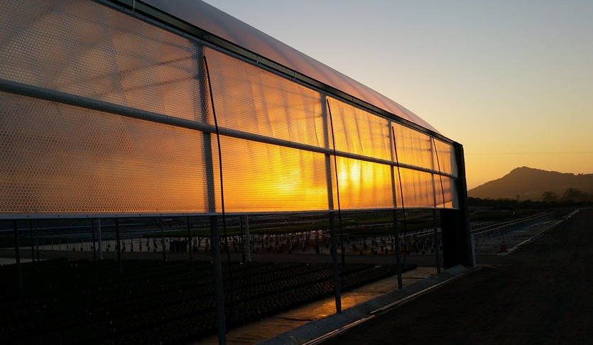 Greenhouse_Plastic_Solawrap_on_PW