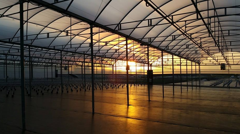 Greenhouse Covering SolaWrap