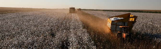 Sustainable Sourcing Challenges: Cotton