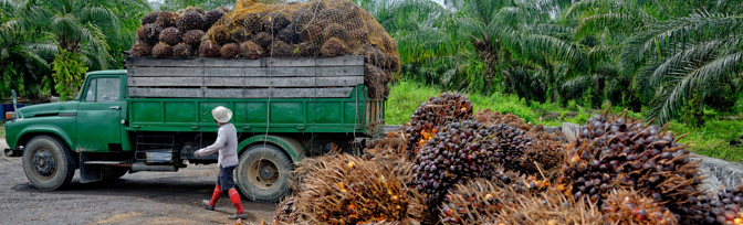 Palm Oil: What is the Answer?