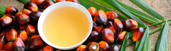 Sustainable Sourcing Challenges: Palm Oil