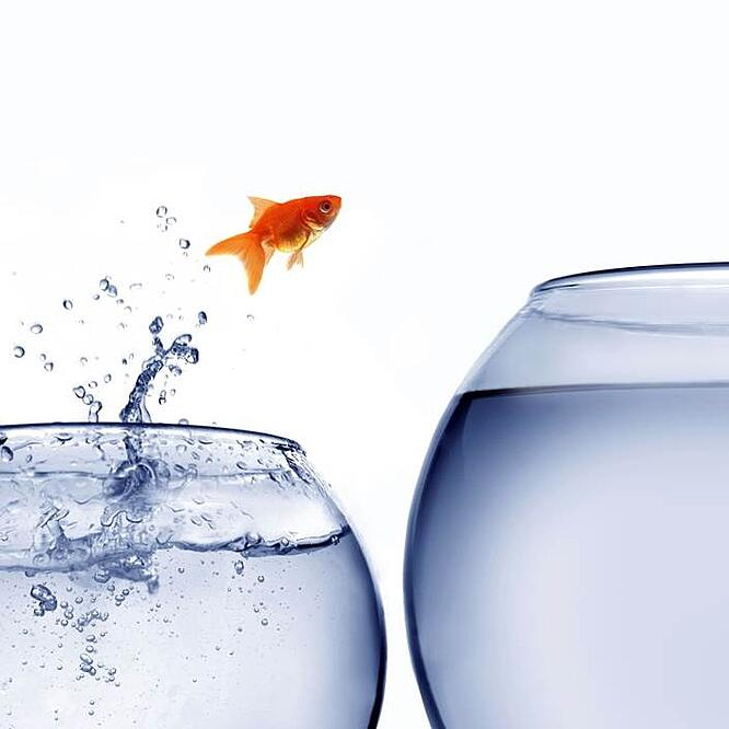 Invico_Partial Fish Jumpting (002).jpg
