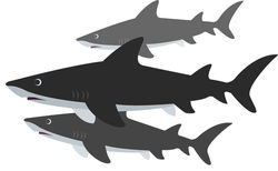 sharks_small_resized-1
