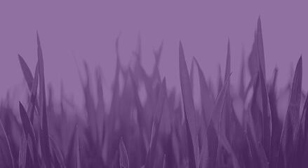 Grass purple