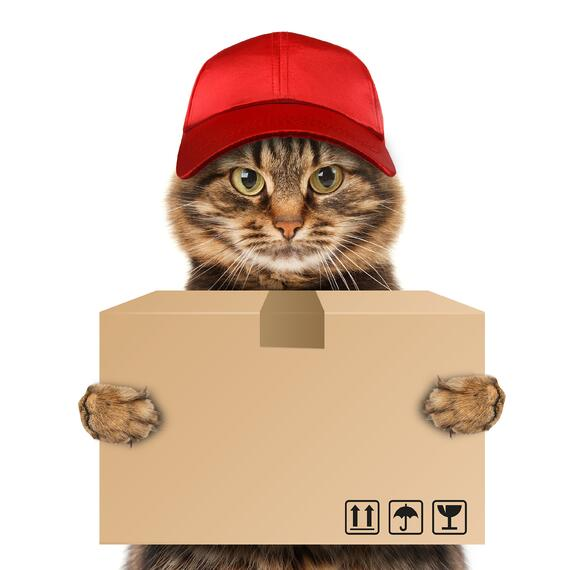 Cat delivers package.