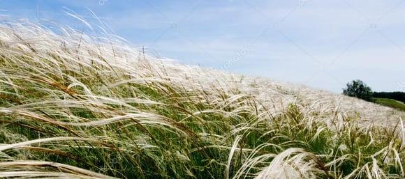 바람 앞의 '들풀'