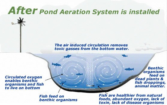 Why aerate my pond for Fish pond aerator