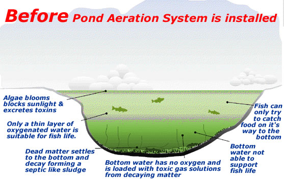Why aerate my pond for Preparing pond water for fish