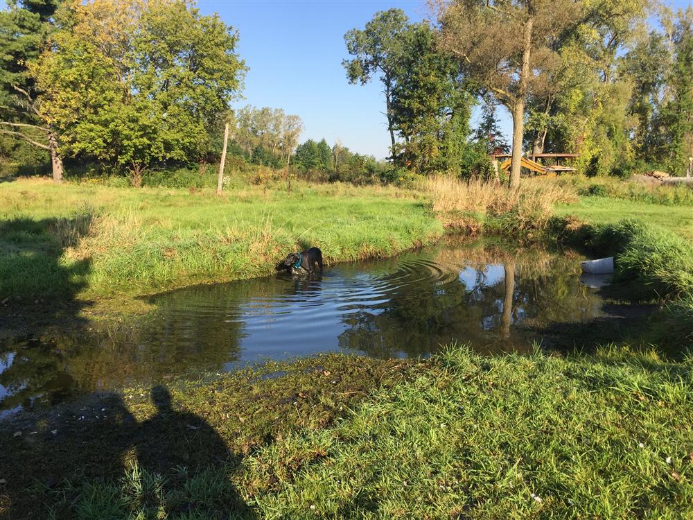 Michigan Farm Pond Builder Farm Pond Digger