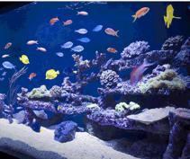 colorful fish tank hack.png