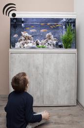 fishtank aquarium