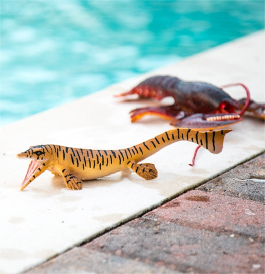 Sea creature toys next to a pool