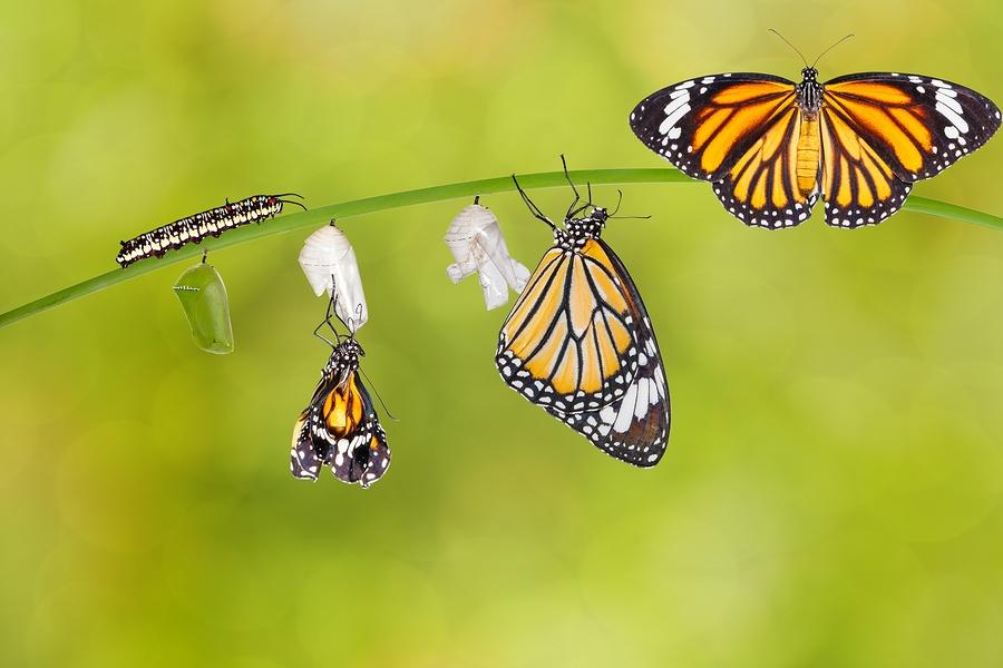 bigstock-Transformation-Of-Common-Tiger-136051931.jpg